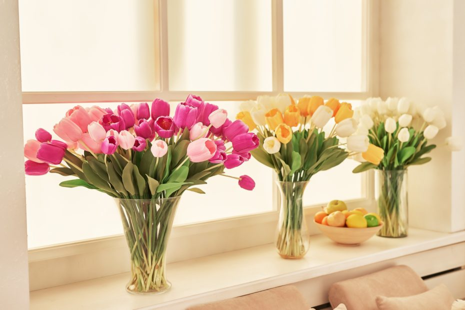 window and tulips